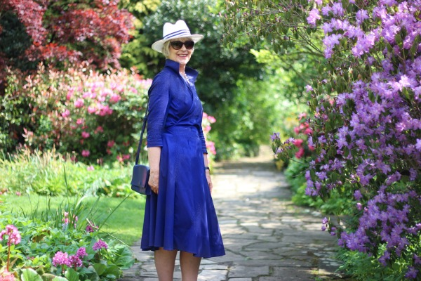 Blue wrap dress walking among Azaleas