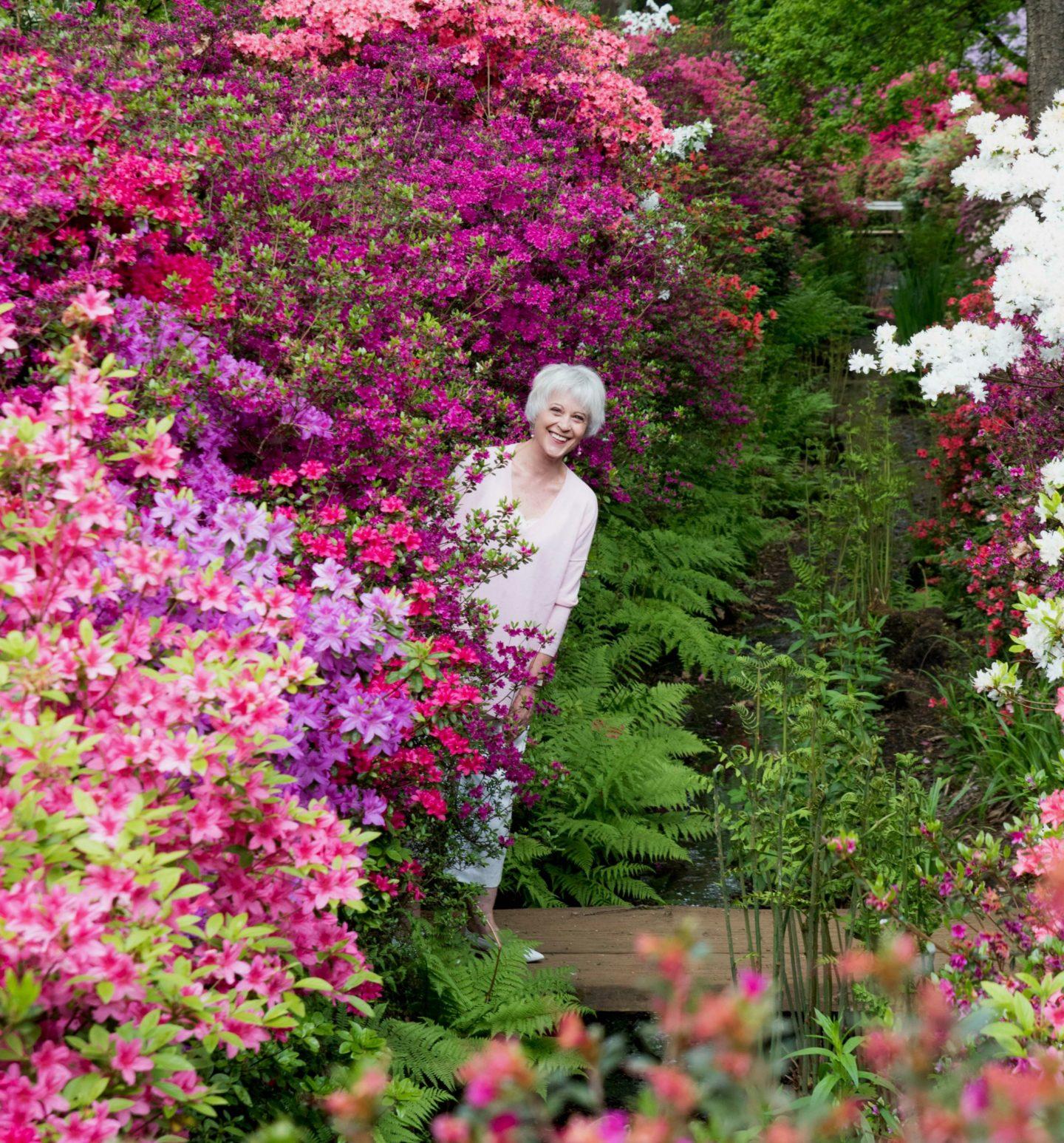 Pink swearer among azaleas