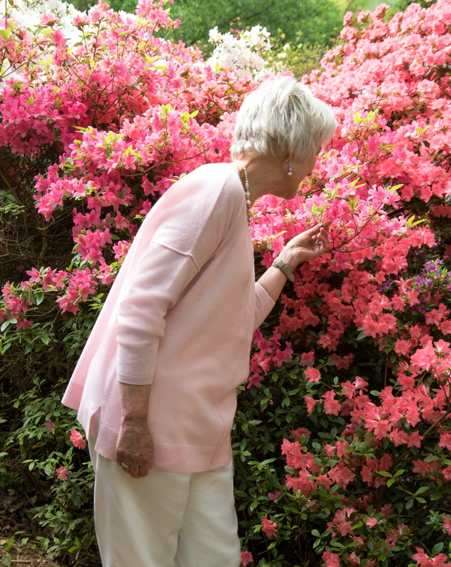 Pink sweater among the azaleas