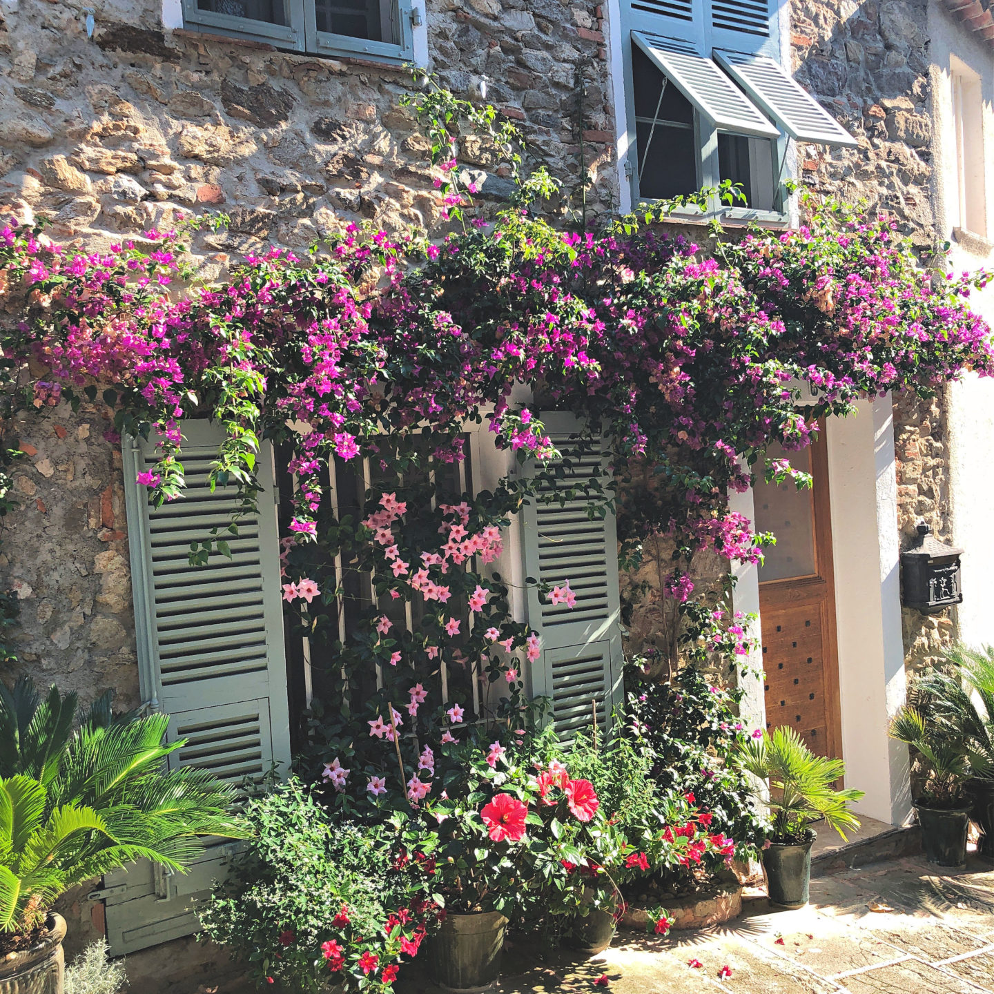 Grimaud village in flower